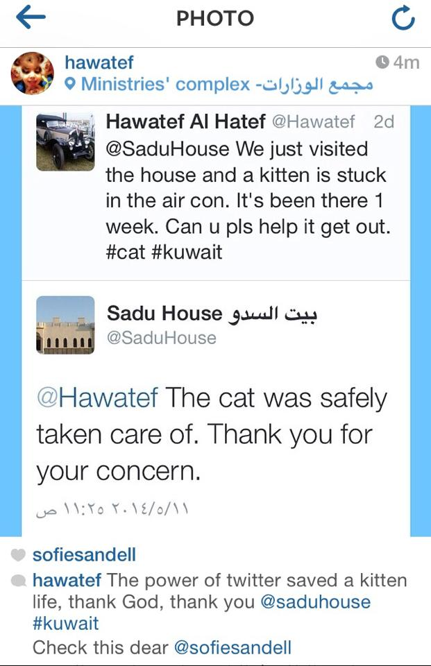 Tweet Kitten saved in Kuwait thanks to Twitter
